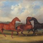 Benjamin Herring Senior Horses