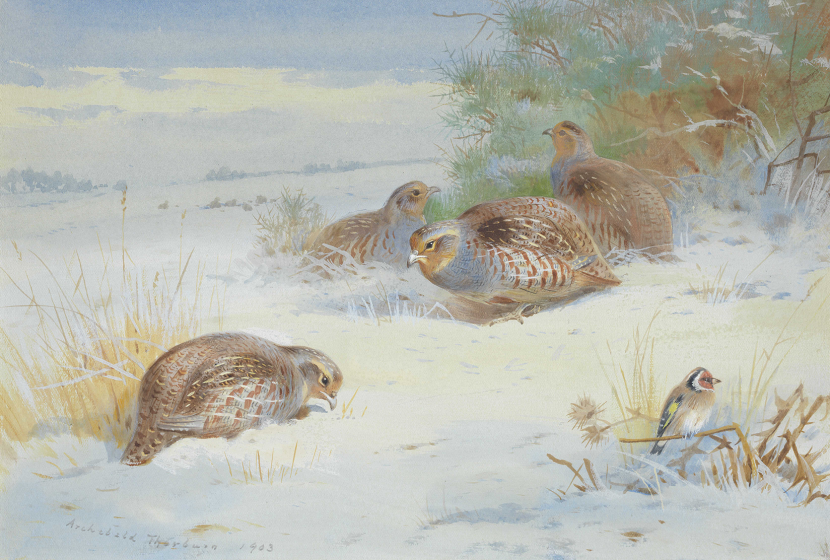 Archibald Thorburn - Partridge and a Goldfinch @1x
